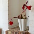 IRIS vase white L